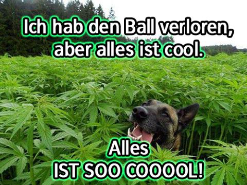 alles-cool